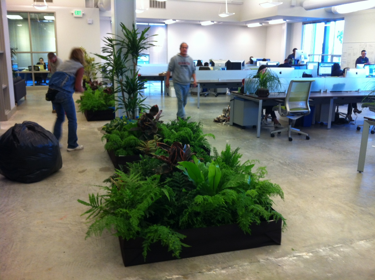Great office work environments pasha sadri for Office plants no natural light